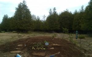 Garden Started